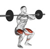 Barbell Front Squats: The Most Effective Leg Exercise That Most People Aren't Doing