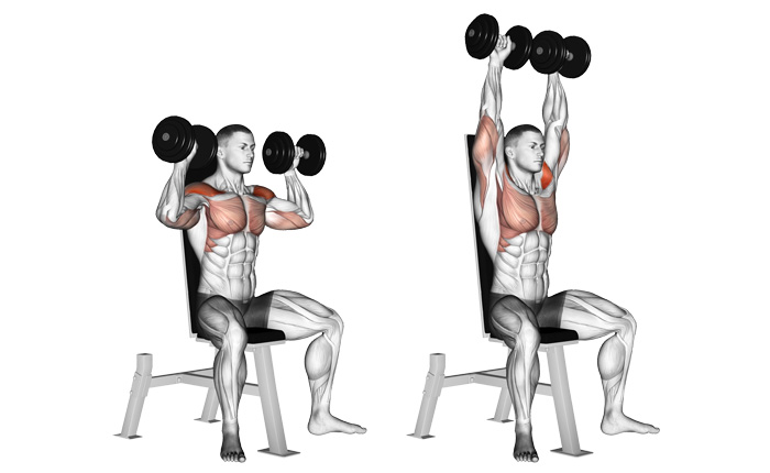 Image result for Dumbbell Shoulder Press