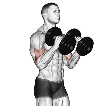 Add a New Dimension To Your Arms With Dumbbell Hammer Curls