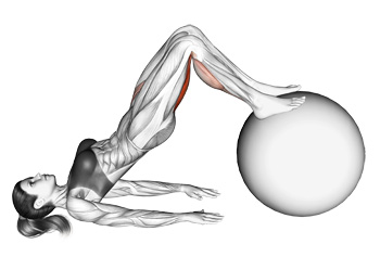 Image result for Swiss-Ball Hip Raise and Leg Curl