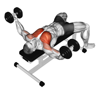 Flat Bench Dumbbell Flyes The Premier Chest Isolation Exercise