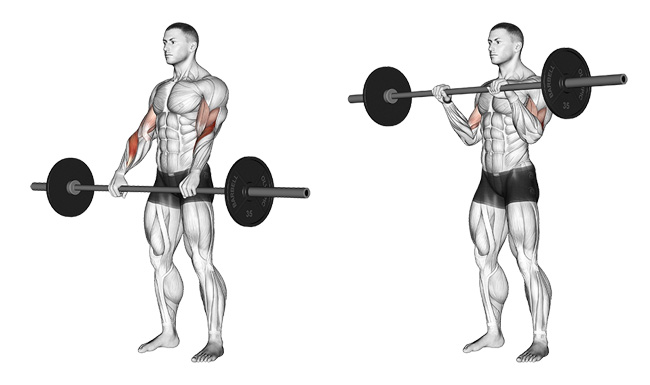 Image result for Reverse Barbell Curls