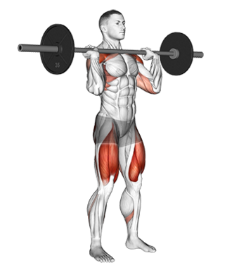 "The Barbell Overhead (""Military"") Press - A Muscle And ... Overhead Press Muscles Worked"