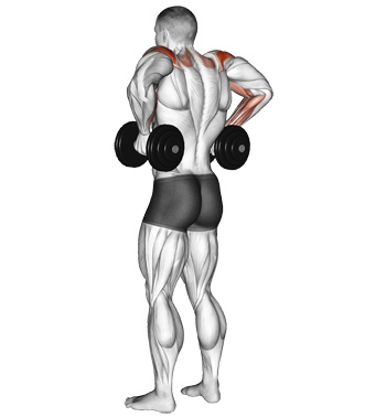 Dumbbell Rear Delt Pulls - A Little Known