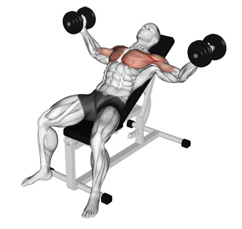 Setting The Bench At A 45 Degree Incline Targets Upper Chest