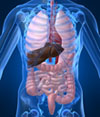 "Colon Cleansing: Are All ""Cleansing"" Diets And Supplements Scams or Are There Any Legitimate Health Or Weight Loss Benefits?"