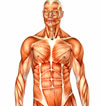 When You Gain Lean Body Mass, How Much of it is Actually Muscle?