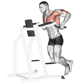 dips muscles worked  what muscles do dips workout