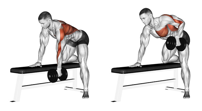 The One Arm Dumbbell Row A Simple And Effective Upper Back Builder