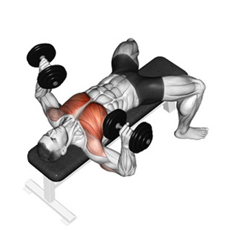 How To Build A Great Chest With The Dumbbell Bench Press