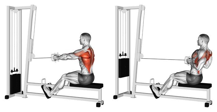 Buy seated cable row machine> OFF-69%