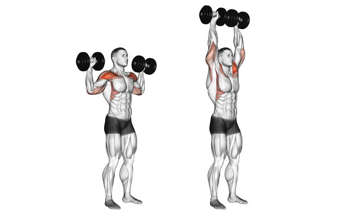 「standing dumbbell press」の画像検索結果