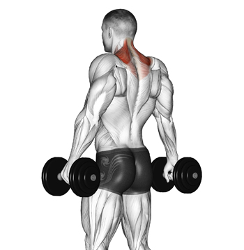 "Dumbbell Shrugs For ""Hulking"" Up Your Traps"