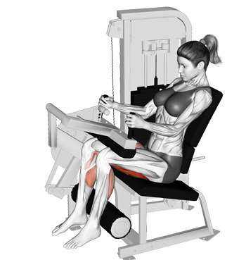 Seated Leg Curl | Review Home Decor