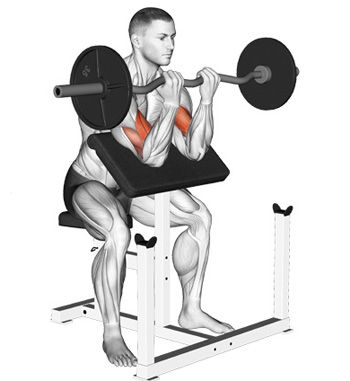 The Barbell Preacher Curl: A Stricter Curl For Better Biceps
